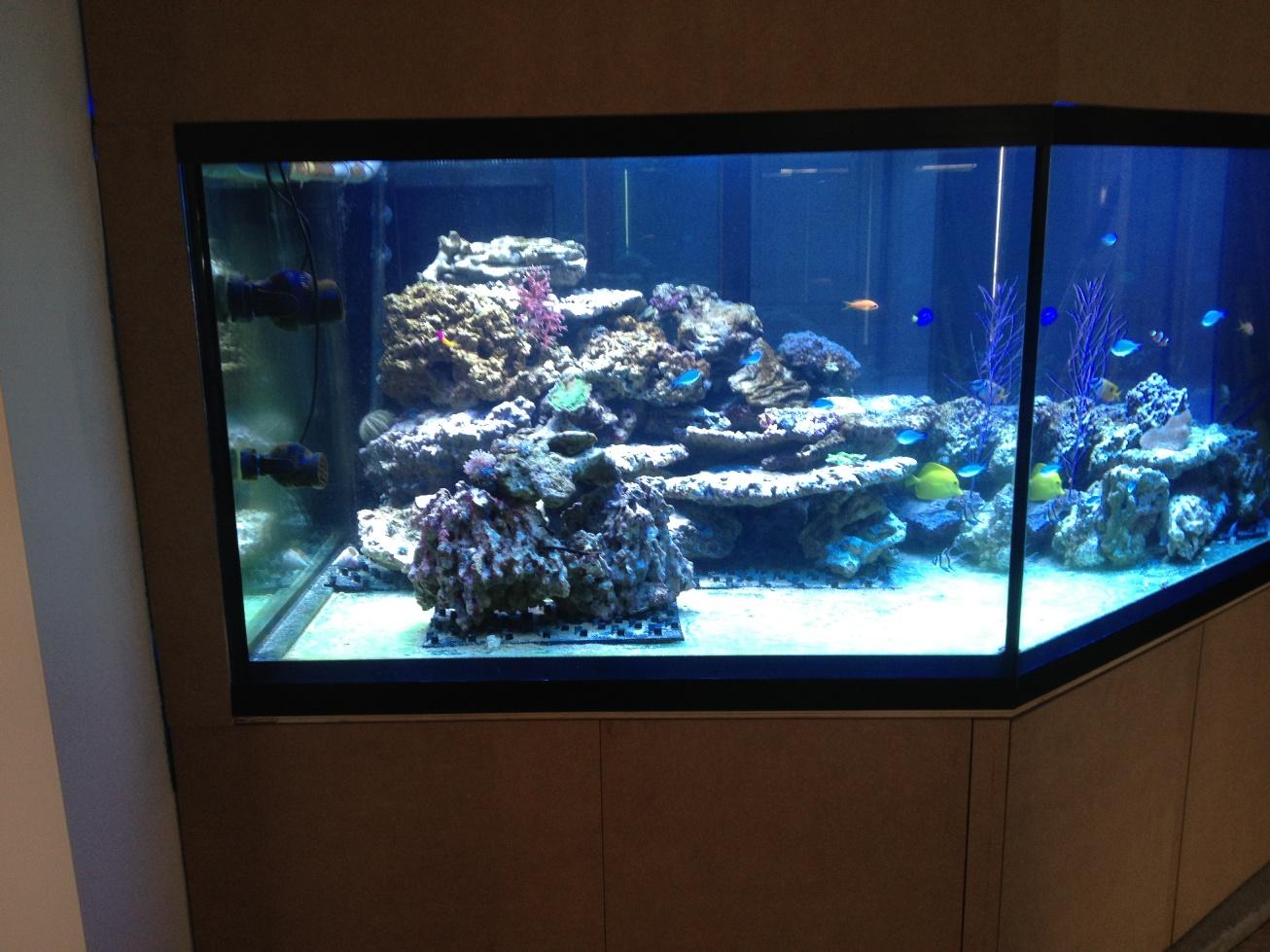 installation d un aquarium d eau de mer