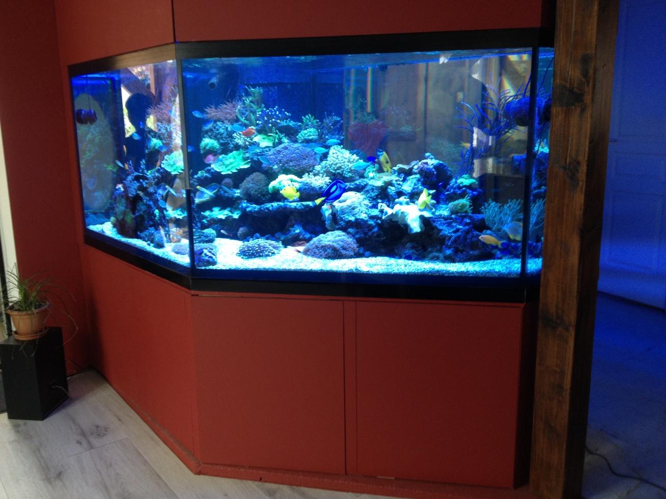 cr ation d 39 un aquarium d 39 eau de mer. Black Bedroom Furniture Sets. Home Design Ideas