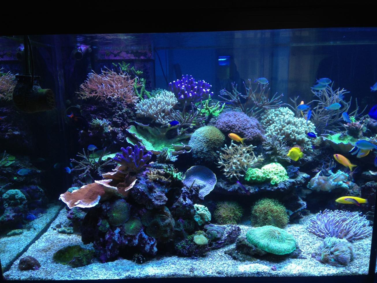 demarrage d 39 un aquarium d 39 eau de mer. Black Bedroom Furniture Sets. Home Design Ideas
