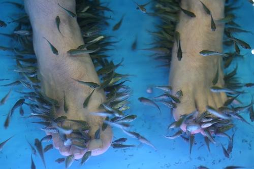 Suivie des installations par une personne ayant toutes les for Garra rufa fish pedicure locations